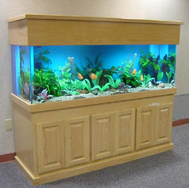 100 gallon freshwater aquarium