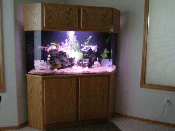 100 gallon corner aquarium